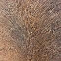 Acondicionadores de pelo