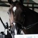 Acces. transporte caballo