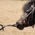 Embocaduras para ponis
